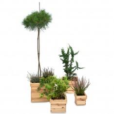 Doniczka kwadrat 20x20x15 cm Natural wood