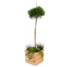 Doniczka kwadrat drewniana, Natural wood 32x32x25 cm